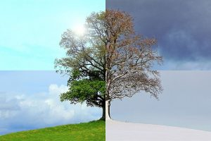 Ein Baum, zusammengesetzt aus vier verschiedenen Bildern, die zu den vier verschiedenen Jahreszeiten gemacht wurden, symbolisiert die verschiedenen Phasen, die auch wir hier auf Erden durchleben.