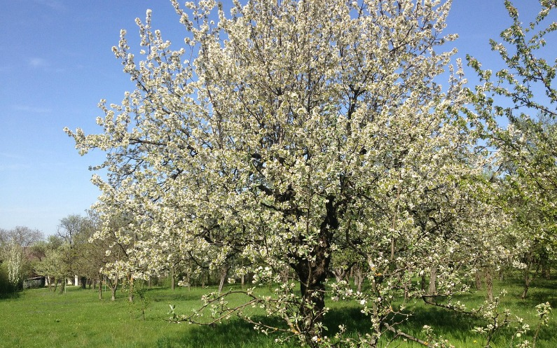 Die Bäume im Frühling feiern