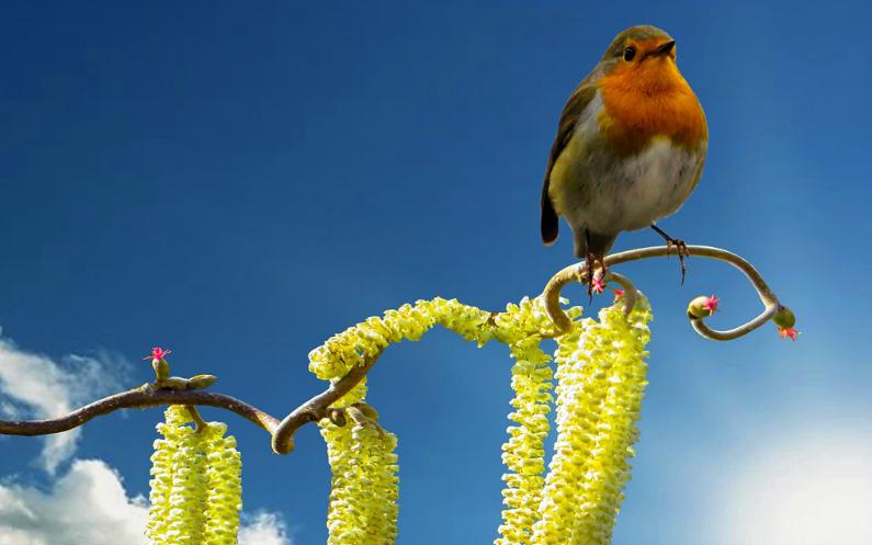 Immer wieder kommt der Frühling – und immer erlöst uns Jesus