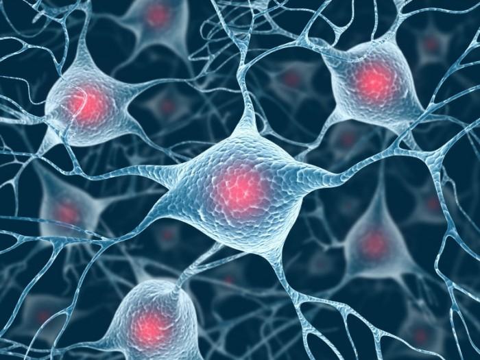 Abbildung von Verknüpfungen von Neuronen über Synapsen. Auch das Gehirn liefert der Wissenschaft immer mehr Erkenntnisse. Gleichzeitig stellt es die Wissenaschaft vor unzählige Rätsel.