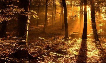 Himmlische Ruh' in einer finster werdenden Welt
