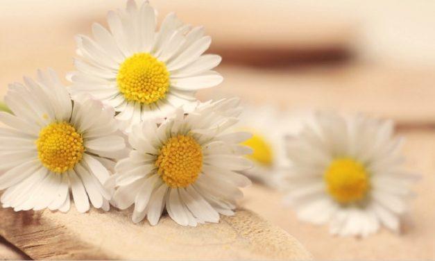 Dankbar sein trotz Schmerzen, Leid und Schwierigkeiten