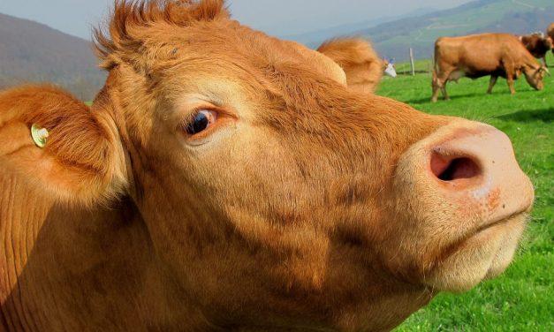 Guten Mutes sein: Wenn uns das Schicksal einen Kuhfladen serviert