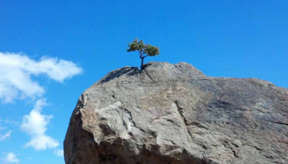 Zu sehen ist ein Buam, der aus einem Felsen wächst.