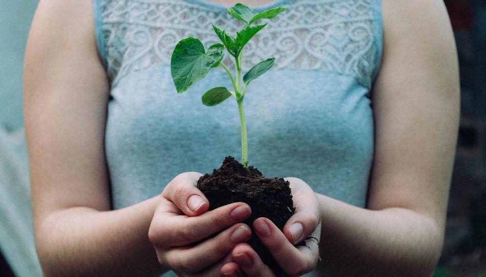 Was man persönlich für die Umwelt tun kann, ist, einen Baum zu pflanzen. Daher sieht man hier zwei Hände, die etwas Erde halten, worin ein kleiner Steckling steckt.