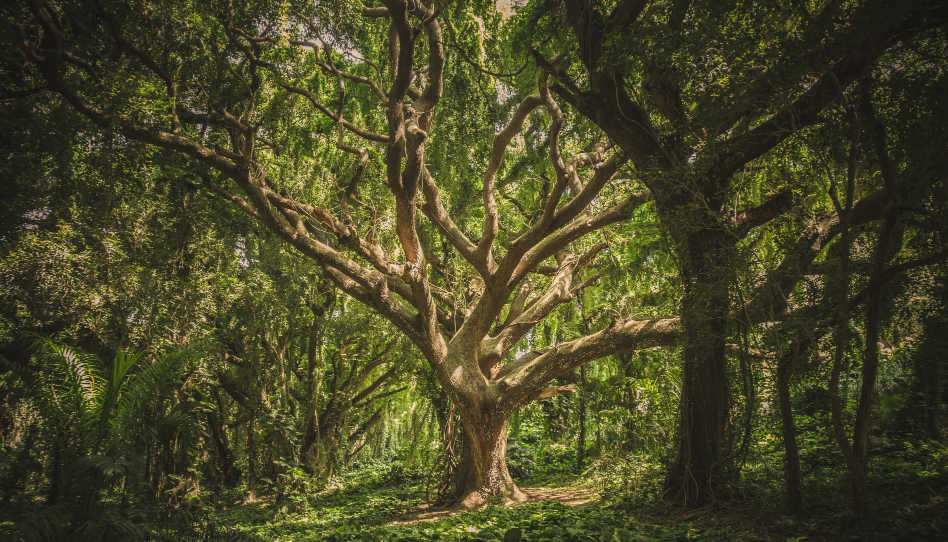 Zu sehen ist ein Ausschnitt eines Waldes. Im Fokus ist ein wunderschöner Baum zu sehen.