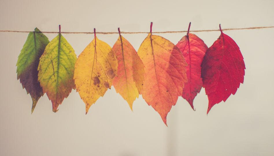 Zu sehen sind verschiedene Blätter in Herbstfarben. So wie sich die Natur immer wieder verändert, gibt es auch innerhalb der Kirche Jesu Christi immer wieder Anpassungen und Veränderungen. So auch während der Herbst-Generalkonferenz 2019.