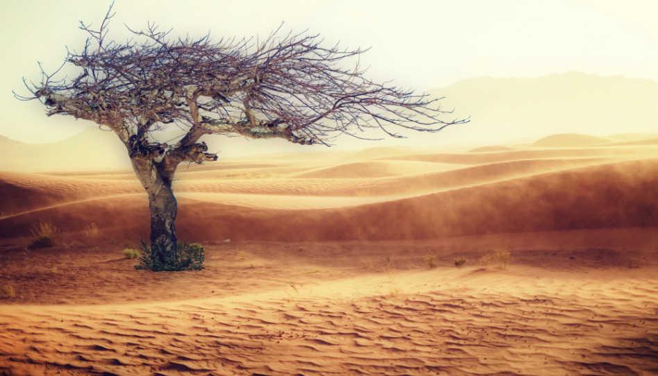 Zu sehen ist ein einzelner Baum inmitten einer Wüste.