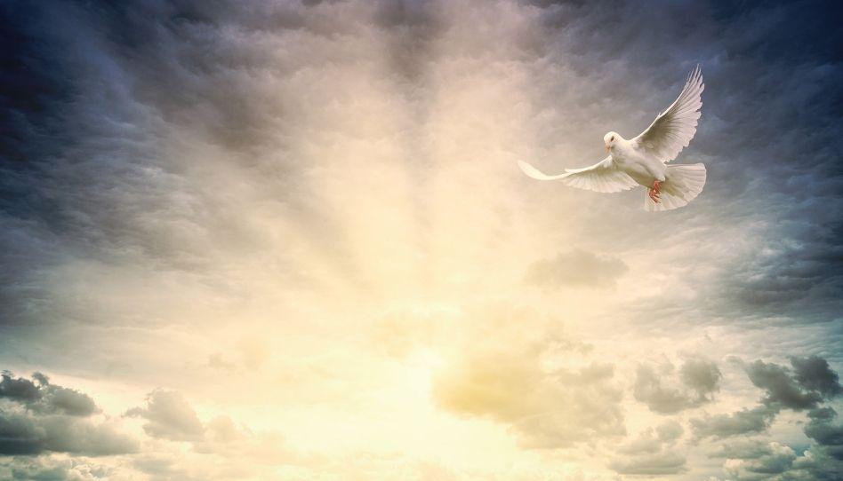 Im Vordergrund ist eine weiße Taube zu sehen, die vor einer aufgehenden Sonne fliegt.